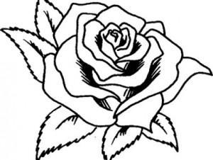 rosa-para-pintar-300x226