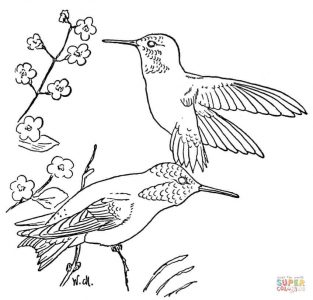 rufous-hummingbird-coloring-page