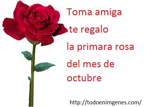 te-mando-la-primera-rosa-del-mes-de-octubre-12