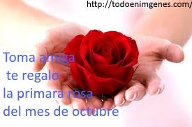 te-mando-la-primera-rosa-del-mes-de-octubre-8