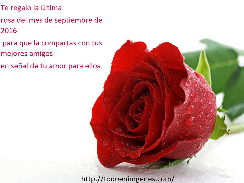 te-regalo-la-ultima-rosa-del-mes-de-septiembre-2