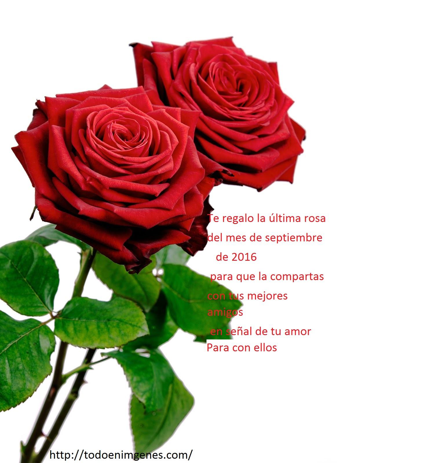 te regalo la última rosa del mes de septiembre