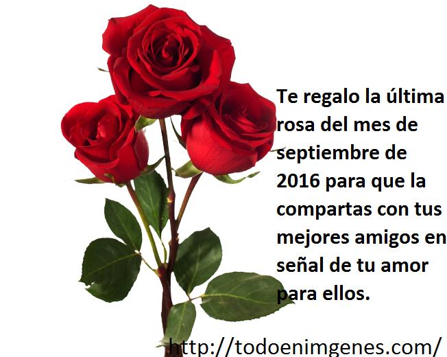 te-regalo-la-ultima-rosa-del-mes-de-septiembre-4