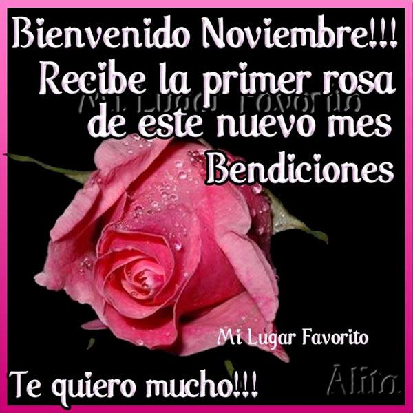 te-regalo-la-primera-rosa-del-mes-de-noviembre-1
