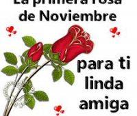 Imagenes de te regalo la primera rosa del mes de noviembre