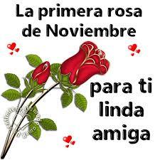 te-regalo-la-primera-rosa-del-mes-de-noviembre-10