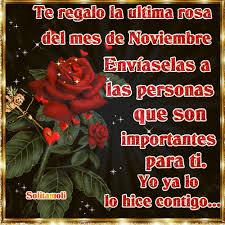 te-regalo-la-primera-rosa-del-mes-de-noviembre-11