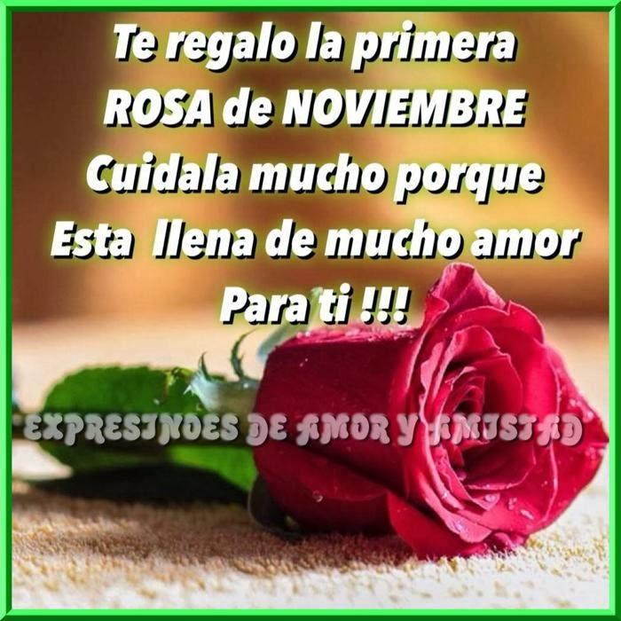 te-regalo-la-primera-rosa-del-mes-de-noviembre-2