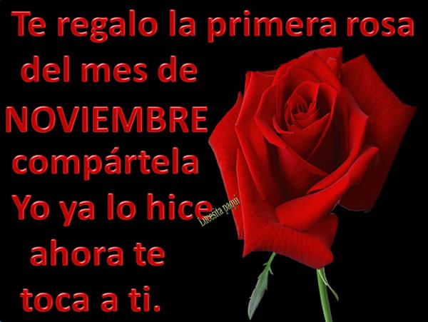 te-regalo-la-primera-rosa-del-mes-de-noviembre-3