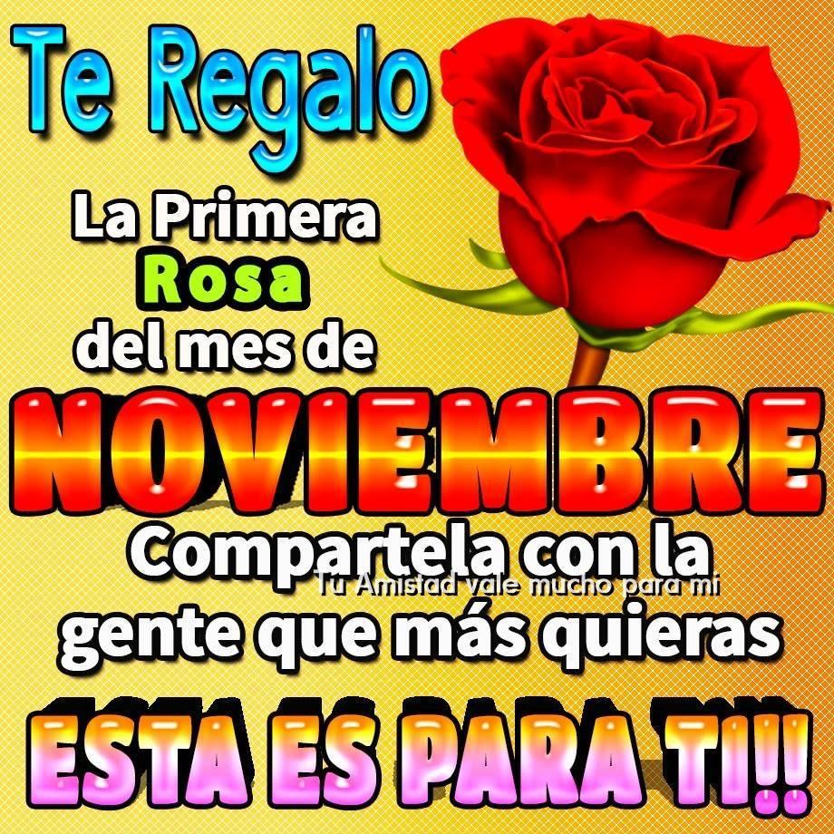 te-regalo-la-primera-rosa-del-mes-de-noviembre-4