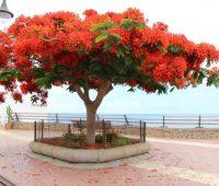 Imágenes del árbol de fuego