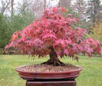 Imágenes de jardines de bonsai