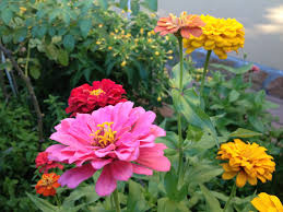 jardines-de-flores-1