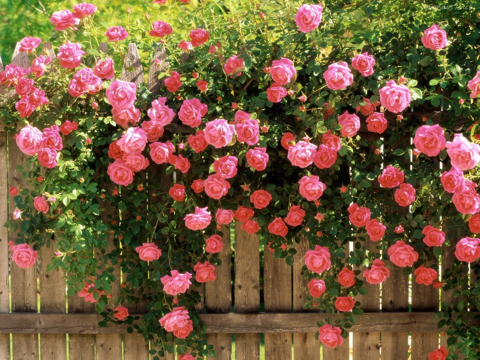 jardines-de-flores-10