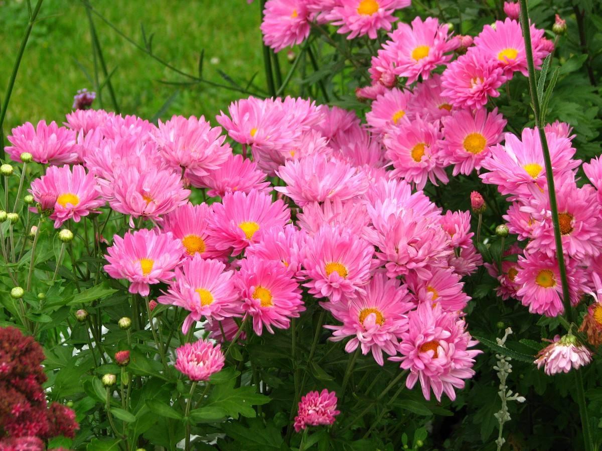 jardines-de-flores-2