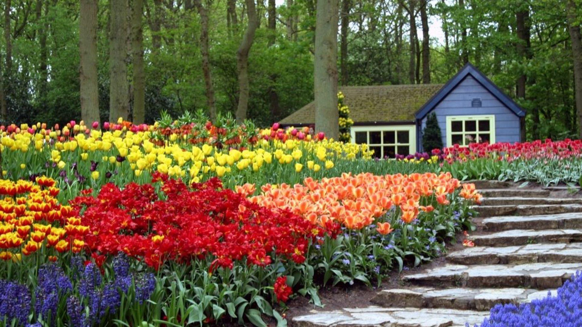 jardines-de-flores-5