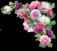 ramos-de-rosas-3