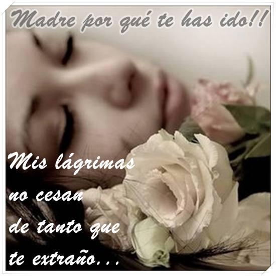 Imágenes De Rosas Para Mi Madre En El Cielo Descargar