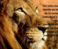 Imágenes de leones con reflexiones