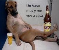 Memes chistosos de animales borrachos