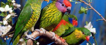 Imágenes de animales exóticos para descargar y compartir