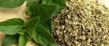 Imágenes de plantas medicinales caseras