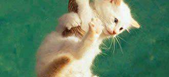 Imágenes de animales caseros para descargar