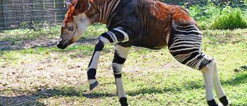Imágenes de los animales más raros para descargar
