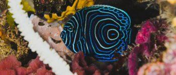 Imágenes de peces hermosos para descargar