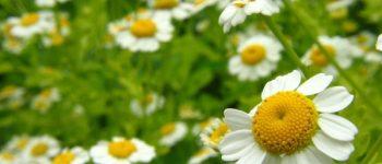 plantas medicinales caseras