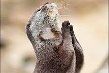 Imágenes de gracias a Dios es viernes para compartir