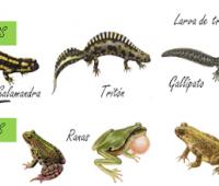 Imágenes de animales anfibios