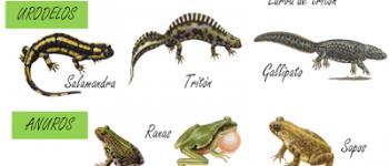 Imágenes de animales anfibios para descargar