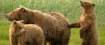 Imágenes de animales mamíferos para la tarea