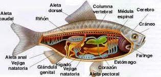 Imágenes de cuales son los animales vertebrados para tarea