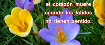 Imágenes de flores con frases tristes para dedicar