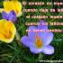 Imágenes de flores con frases tristes