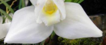 Imágenes de las flores de guatemala para descargar