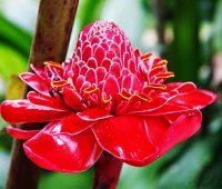 Imágenes de las flores de guatemala