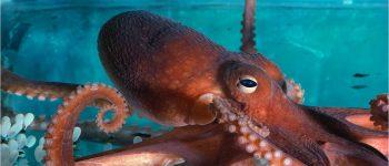 Imágenes de los animales invertebrados acuáticos para tarea