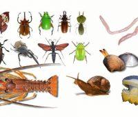 Imágenes de los animales invertebrados