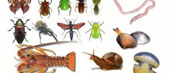 Imágenes de los animales invertebrados para descargar