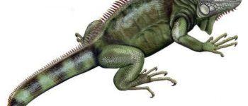 Imágenes de reptiles para descargar