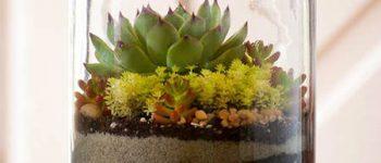 Imágenes de terrario de suculentas bonitas