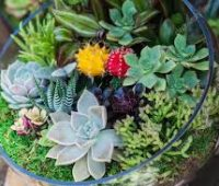 Imágenes de terrario de suculentas