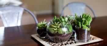 Imágenes de terrarios de cristal para interiores