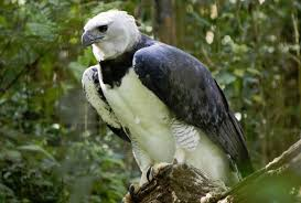 Los 20 animales en peligro de extinción de México