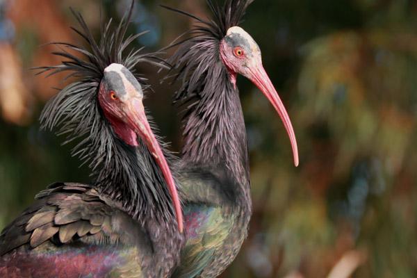 12 Animales más raros del mundo