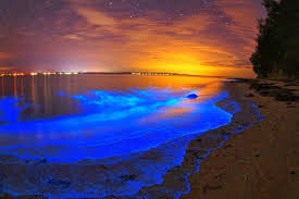 Bioluminescent Mosquito Bay