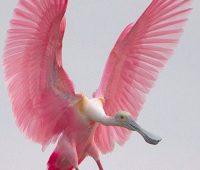 Imágenes de aves exóticas de argentina